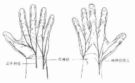 手的各部位名称图解
