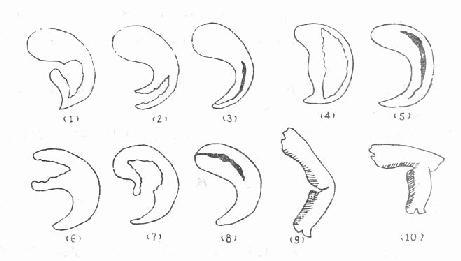 动物 简笔画 设计 矢量 矢量图 手绘 素材 细菌病毒 线稿 461_261