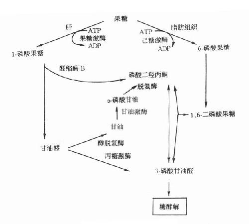 结合型的葡萄糖苷酸化合物具有较强的酸性
