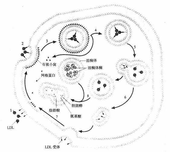 手绘细胞结构模式图