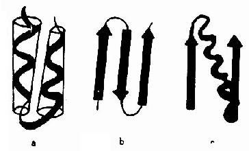 超二级结构和结构域