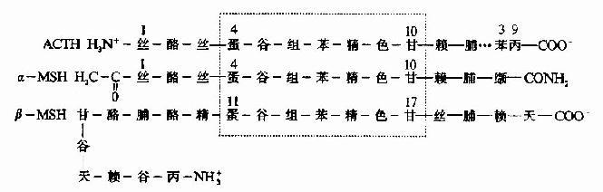 图1-13 镰刀状红细胞性贫血血红蛋白遗传信息的异常 (二)蛋白质空间橡象与功能活性的关系 蛋白质多种多样的功能与各种蛋白质特定的空间构象密切相关,蛋白质的空间构象是其功能活性的基础,构象发生变化,其功能活性也随之改变。蛋白质变性时,由于其空间构象被破坏,故引起功能活性丧失,变性蛋白质在复性后,构象复原,活性即能恢复。 在生物体内,当某种物质特异地与蛋白质分子的某个部位结合,触发该蛋白质的构象发生一定变化,从而导致其功能活性的变化,这种现象称为蛋白质的别构效应(allostery)。 蛋白质(或酶)的别构