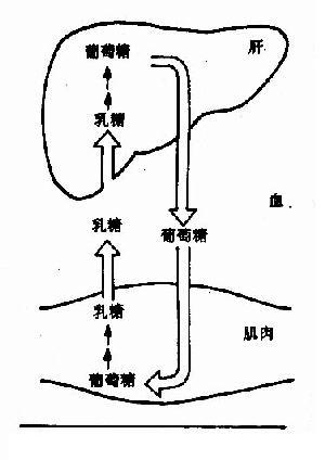3-磷酸甘油醛转变为1,3-二磷酸甘油酸的反应是底物磷酸化还是氧化磷酸