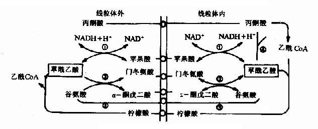 电路 电路图 电子 原理图 633_258