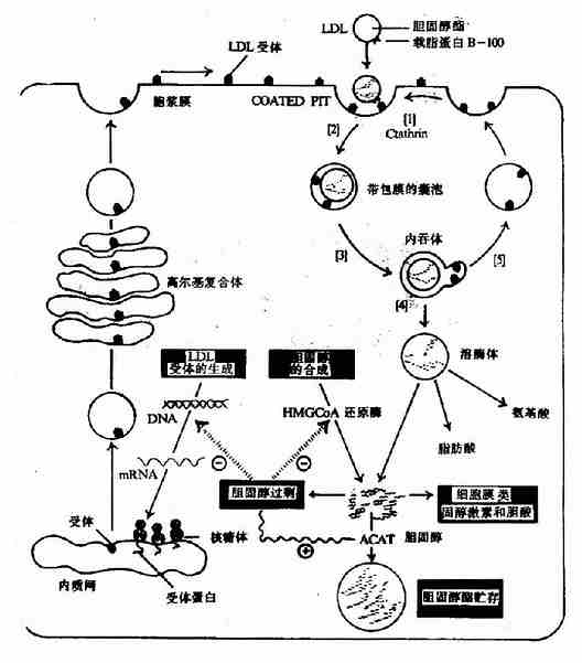 分子组成和细胞结构知识网络图