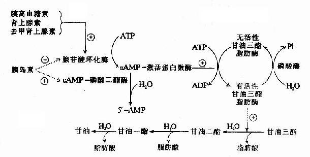 细胞代谢知识结构图