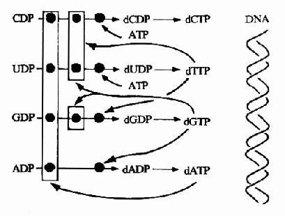 电路 电路图 电子 原理图 409_310