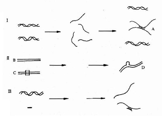 核酸杂交及其应用示意图