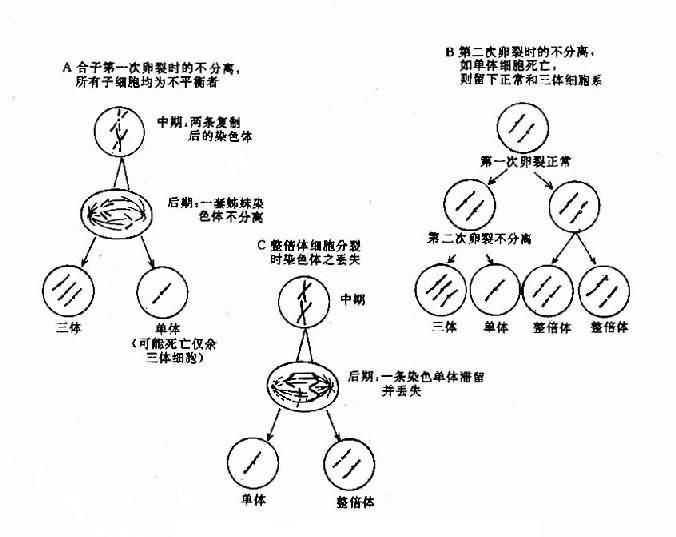 嵌合体形成的机理示意图