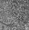各种指纹类型及嵴纹计数计数沿着中心点到三叉的直线