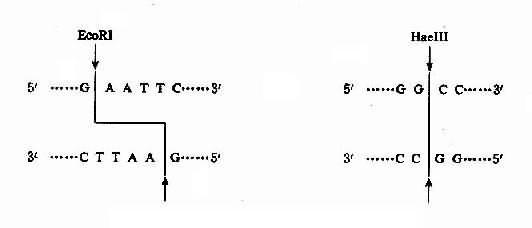 限制输出的放大电路图