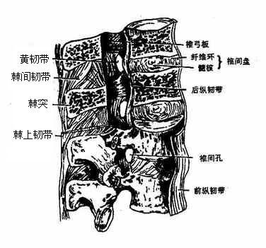 脊柱彼岸花纹身手稿