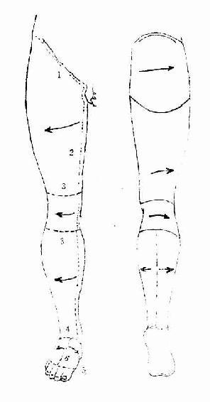 小腿前部和足背的浅层结构