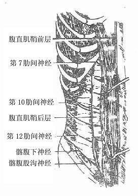脊髓圆锥损伤