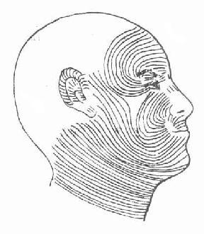 面部浅层结构