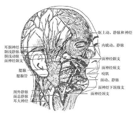 素描头像结构分面图