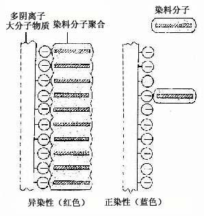 银染法中有些组织结构可直接使硝酸银还原而显示