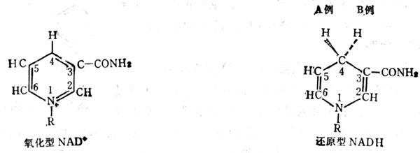 谷类中有结合型的尼克酸,不能利用。可分为二种结合物:与肽链(分子量12,000~13,000)结合;与碳水化物结合成复合体(分子量为370)。麸皮中有这种结合型的尼克酸(niacytin),用碱提取(或碱水解)和谷物,其尼克酸测定值较酸性或中性提取液的高20%,谷类通过培育新品种可使色氨酸增加,也可使其成为尼克酸来源。我国已培育出高色氨酸品种的玉米可治疗尼克酸缺乏引起的瘌皮病。 大剂量的亮氨酸可使癞皮病发生。Jowar(一种食物)尼克酸及色氨酸量不少,但因亮氨酸量大,也可使癞皮病发生。在大鼠的酪蛋白饲料