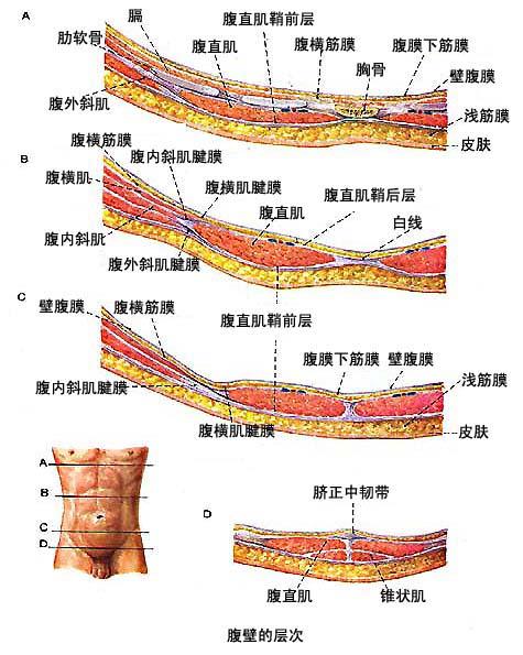 个体生命系统结构层次