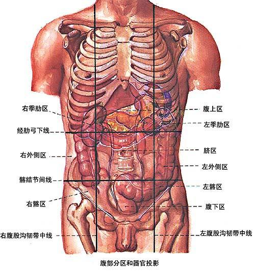 右腹部位置图解