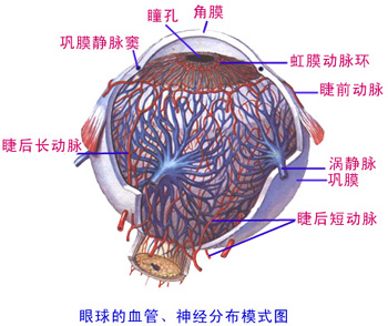 解剖学 眼副器