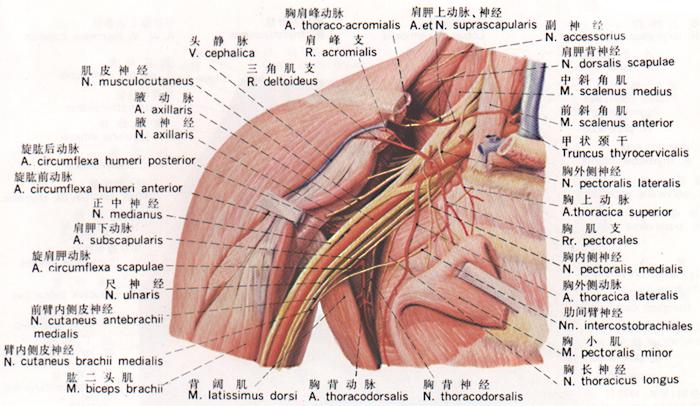 神经元的形态结构有什么特点