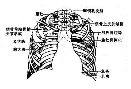 胸锁乳突肌及锁骨上皮肤皱褶