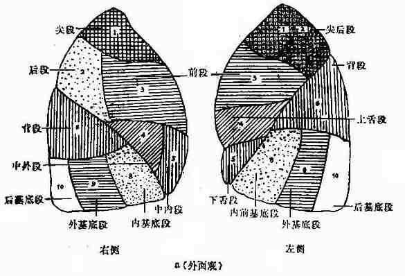 肺����y�9����_放射诊断/肺