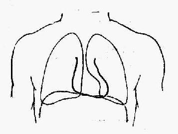 诊断学/心脏的叩诊图片