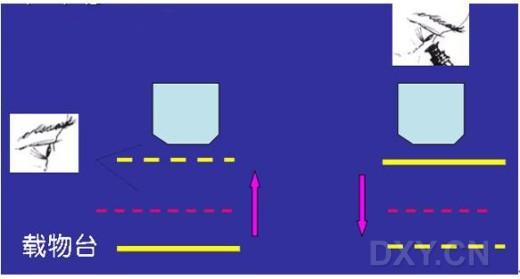 显微镜的使用,细胞,组织非切片法观察(多图)